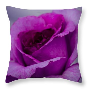 Purple Rose Throw Pillow by Cathy Donohoue