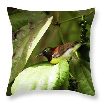 Purple-rumped Sunbird Throw Pillow by Venura Herath