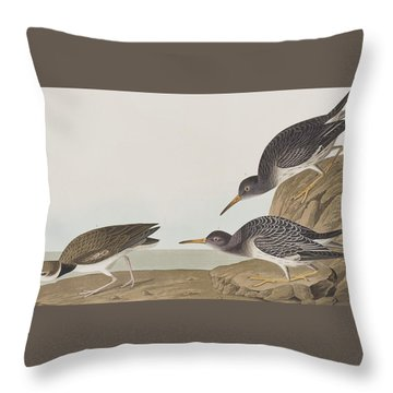 Purple Sandpiper Throw Pillow by John James Audubon