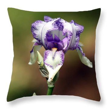 Throw Pillow featuring the photograph Purple Striped Bearded Iris by Sheila Brown