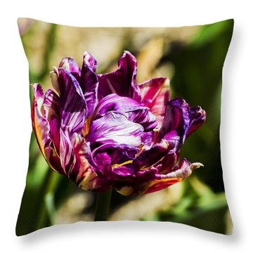 Throw Pillow featuring the photograph Purple Striped Tulip by Angela DeFrias