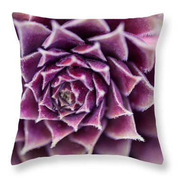 Purple Succulent Plant Blossom In Summer Throw Pillow