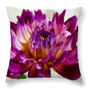 Throw Pillow featuring the photograph Purple Sunset Flower 1 by Marianne Dow