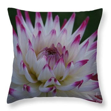 Purple Tipped Starburst Dahlia Throw Pillow