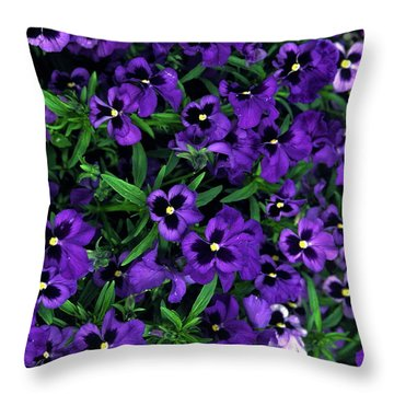 Purple Viola Flowers Throw Pillow by Sally Weigand