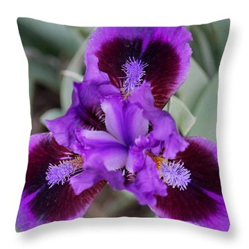 Purply Throw Pillow