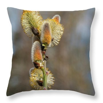 Pussy Willow Catkins 1 Throw Pillow