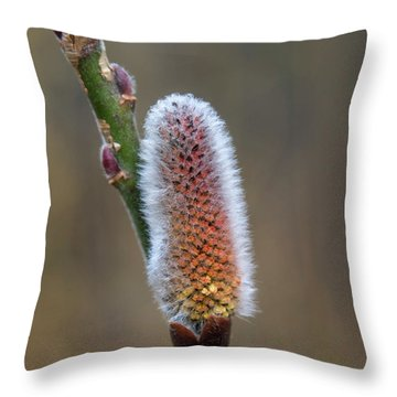 Pussy Willow Catkins 3 Throw Pillow