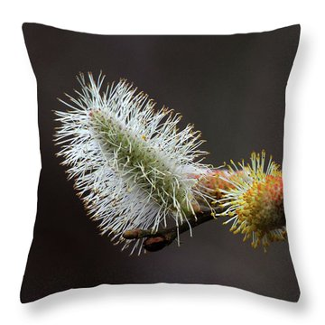 Pussy Willow Stony Brook New York Throw Pillow