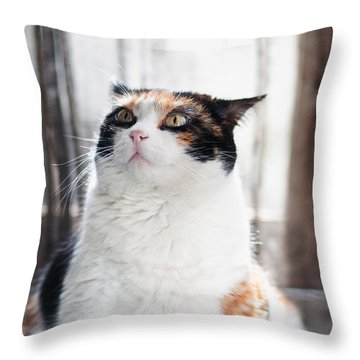 Throw Pillow featuring the photograph Puzzled by Laura Melis