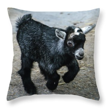 Pygmy Goat Kid Throw Pillow