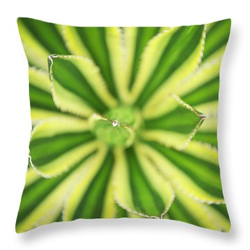 Quadricolor Agave Plant Throw Pillow