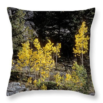 Aspens In Fall At Eleven Mile Canyon, Colorado Throw Pillow