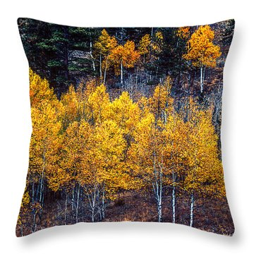 Aspen In Fall Colors In Eleven Mile Canyon Colorado Throw Pillow