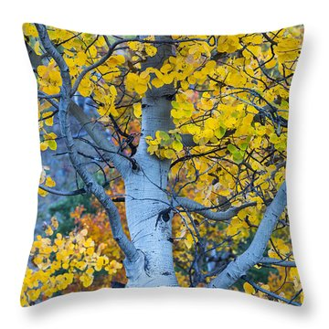 Quaking Aspen Throw Pillow