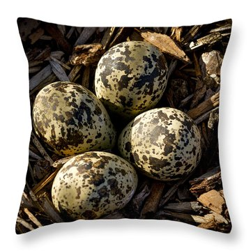 Quartet Of Killdeer Eggs By Jean Noren Throw Pillow by Jean Noren