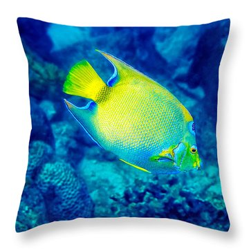 Throw Pillow featuring the photograph Queen Angelfish I by Perla Copernik