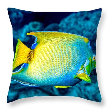Throw Pillow featuring the photograph Queen Angelfish II by Perla Copernik