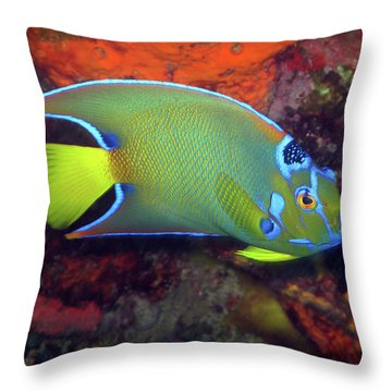 Queen Angelfish, U. S. Virgin Islands 2 Throw Pillow