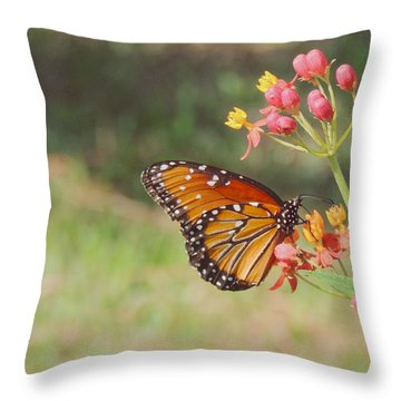 Queen Butterfly On Milkweed Throw Pillow