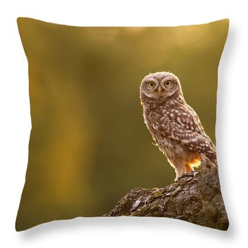 Qui, Moi? Little Owlet In Warm Light Throw Pillow by Roeselien Raimond