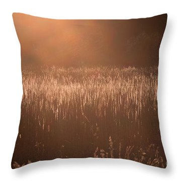 Quiet Evening Light Throw Pillow