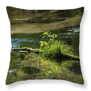 Quiet Trout Stream Throw Pillow