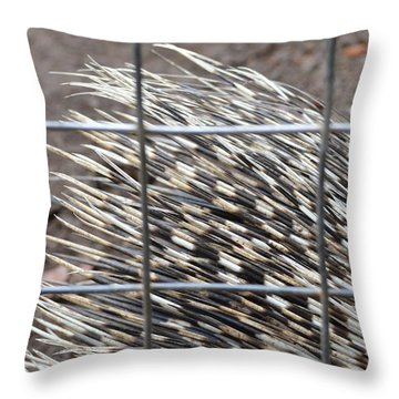 Quills Of An African Porcupine Throw Pillow by Linda Geiger