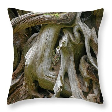 Quinault Valley Olympic Peninsula Wa - Exposed Root Structure Of A Giant Tree Throw Pillow by Christine Till