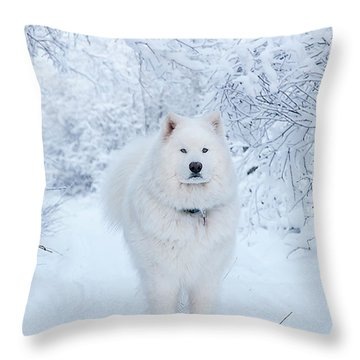 Quinn The Mighty Samoyed Throw Pillow