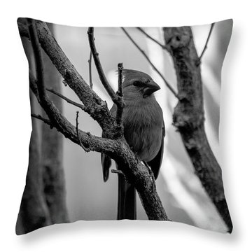Quite Bird In The Tree Throw Pillow