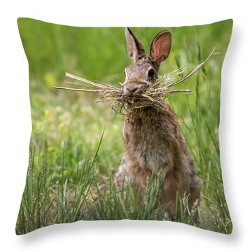 Rabbit Collector Square Throw Pillow by Terry DeLuco