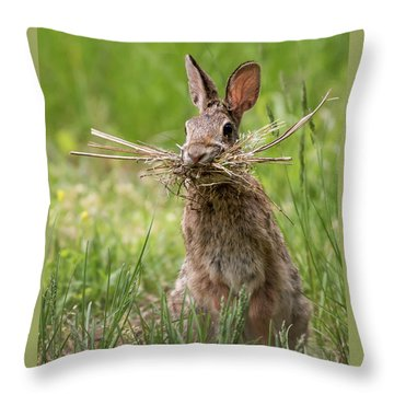 Rabbit Collector  Throw Pillow by Terry DeLuco