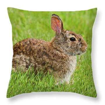 Rabbit In A Grassy Meadow Throw Pillow