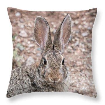 Rabbit Stare Throw Pillow