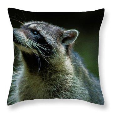 Raccoon 1 Throw Pillow