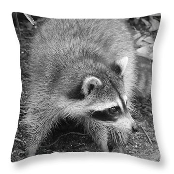 Raccoon - Black And White Throw Pillow by Carol Groenen