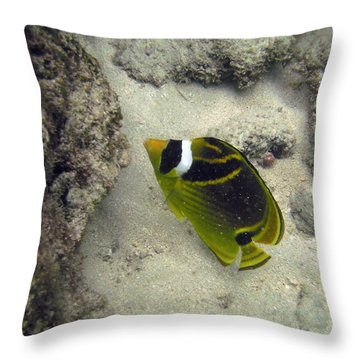 Raccoon Butterflyfish Throw Pillow by Michael Peychich