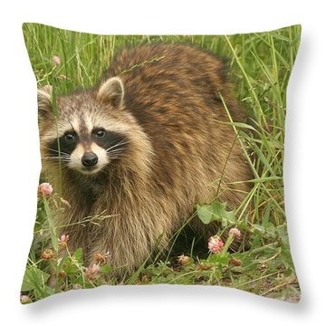 Throw Pillow featuring the photograph Raccoon  by Doris Potter