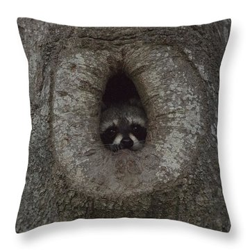 Raccoon In His Tree Hole Throw Pillow by D Wallace