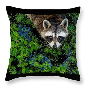 Raccoon Looking Up Throw Pillow