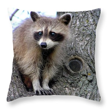Raccoon Lookout Throw Pillow by Susan  Dimitrakopoulos