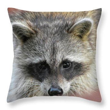 Raccoon's Gorgeous Face Throw Pillow