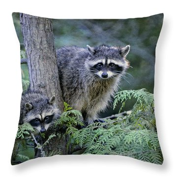 Raccoons In Stanley Park Throw Pillow