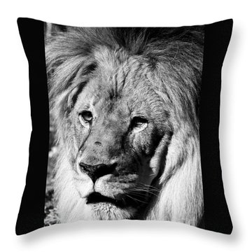 Throw Pillow featuring the photograph Racine Zoo Lion by Ricky L Jones