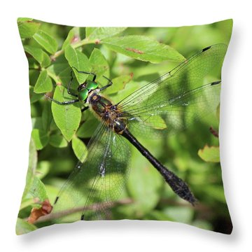 Racket-tailed Emerald  Throw Pillow