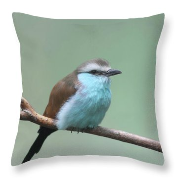Racket-tailed Roller V2 Throw Pillow