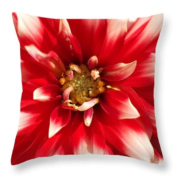 Radiant Dahlia Throw Pillow
