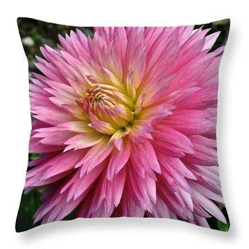 Radiant Dahlia  Throw Pillow
