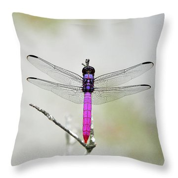 Radiant Roseate Throw Pillow by Al Powell Photography USA